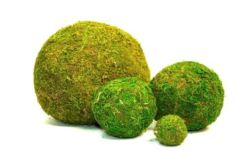 Where to find Decorative Moss Balls in Corvallis