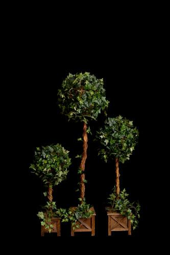 Where to find Topiary Tree - 30  single in Corvallis